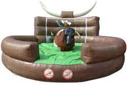 Rodeo bull hire from Ding's Entertainment Ltd